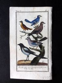 Buffon 1785 Antque Hand Colored Bird Print. Magpie, Blue Jay, Jay 5-3